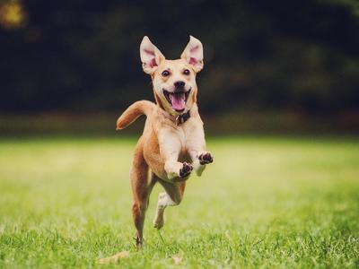 Kutyának áll a világ!